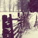 snow on a fence by edie