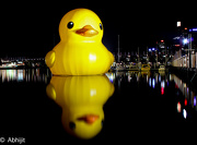 6th Jan 2013 - Rubber Duckie