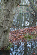 6th Jan 2013 - Flooded verge and woodland