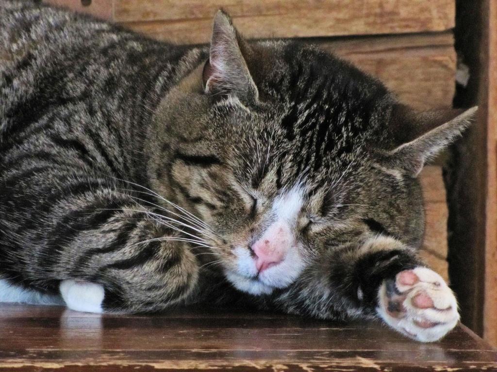 Sleepy Bad Kitty by maggie2