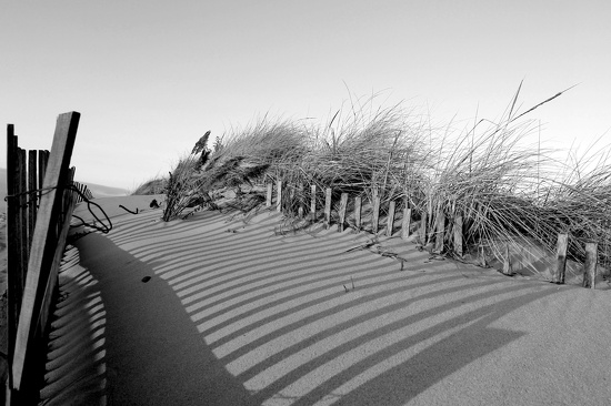 Dune Shadows by lauriehiggins