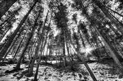7th Jan 2013 - Forest of Wonder