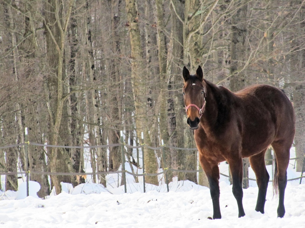 Mr Ed by maggie2