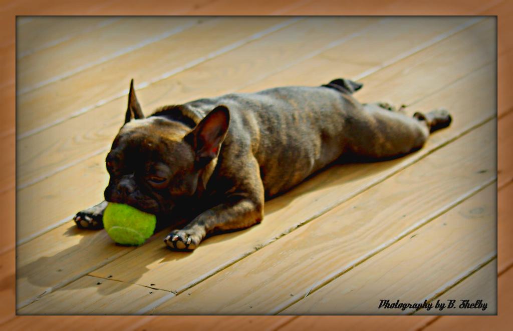 I'm not lazy.  I'm on the ball. by vernabeth