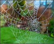 10th Jan 2013 - Cob Web