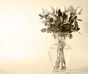11th Jan 2013 - Roses ~ 1