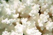 "5th Jan 2013 - ""Nature's popcorn""?"