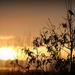 Songbird at Sunrise by cindymc