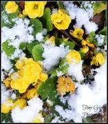 12th Jan 2013 - First Snow
