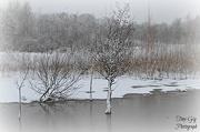 14th Jan 2013 - Snow & Ice