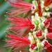 Flourish by corymbia
