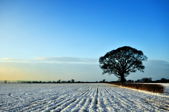 Snowy field with tree by seanoneill