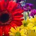 Flowers by kathyladley