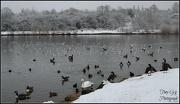 15th Jan 2013 - Birds
