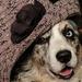 Doggie Dress Up Day - take 5  by cdonohoue