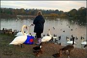 16th Jan 2013 - Swan Lake