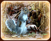 27th Dec 2012 - This little squirrely went to market