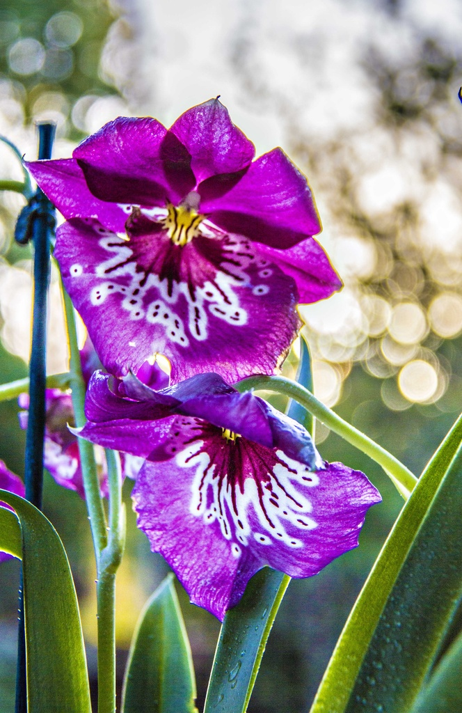 Late afternoon in the garden by corymbia