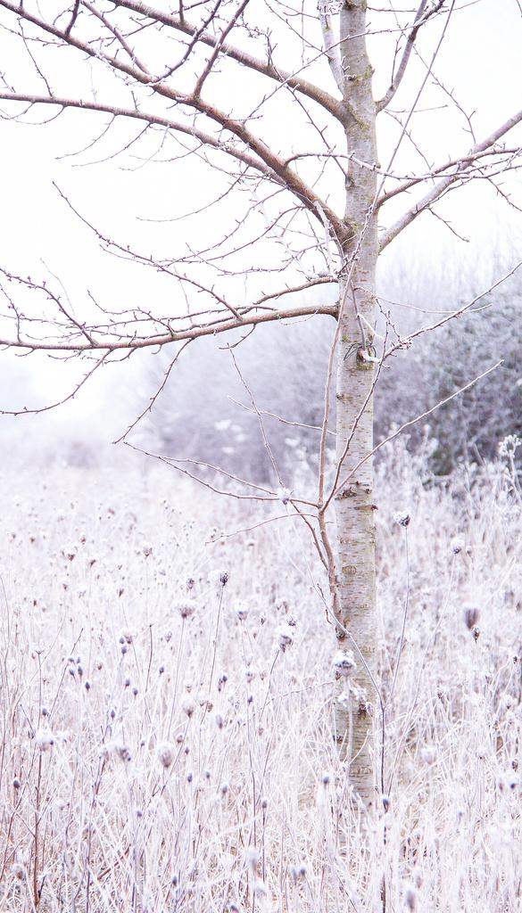 Frosty-cold by dulciknit