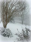17th Jan 2013 - Snow