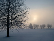 18th Jan 2013 - Snowy Morn