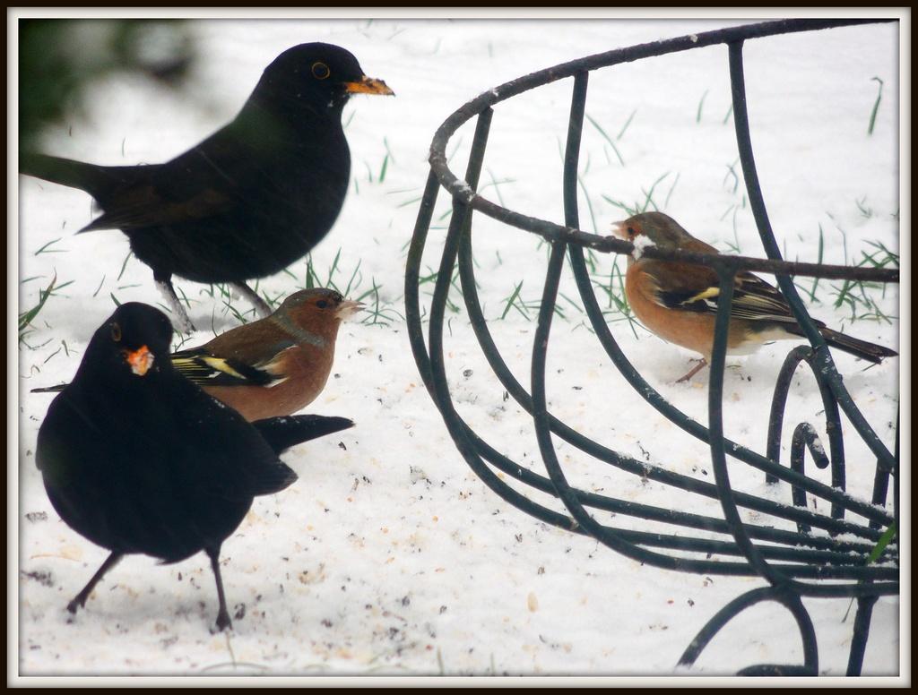 2 by 2 under the feeder by rosiekind