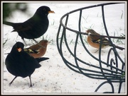 18th Jan 2013 - 2 by 2 under the feeder