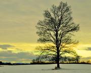 19th Jan 2013 - Tree