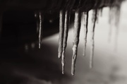 19th Jan 2013 - Icicles