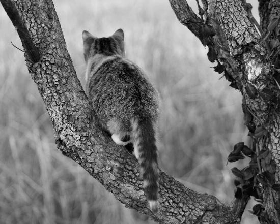 Cattail by cjwhite