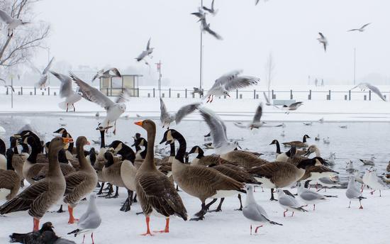 gulls by peadar