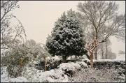 21st Jan 2013 - More Snow