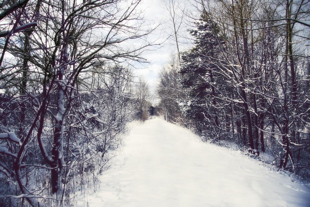 snowy woods by edie