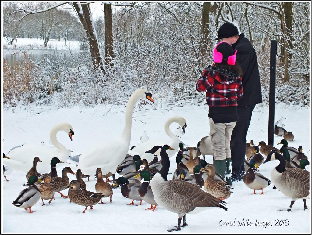 Feed The Birds by carolmw