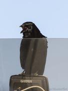 22nd Jan 2013 - Crow Pilot Talking