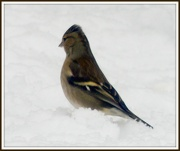 22nd Jan 2013 - Little birdie