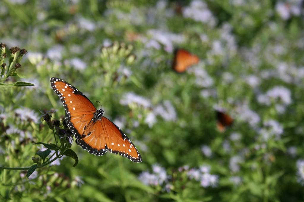Butterflies 2 by kerristephens