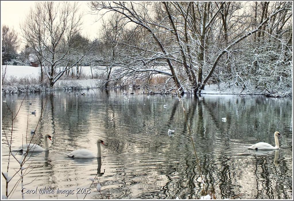 Winter Reflections by carolmw