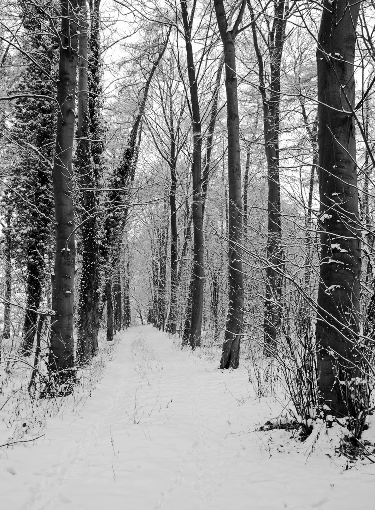 winter woodland by jantan