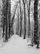 20th Jan 2013 - winter woodland