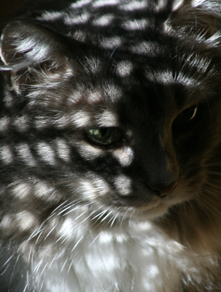 Shadows on my kitty by mittens
