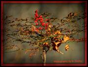 29th Dec 2012 - Nandina