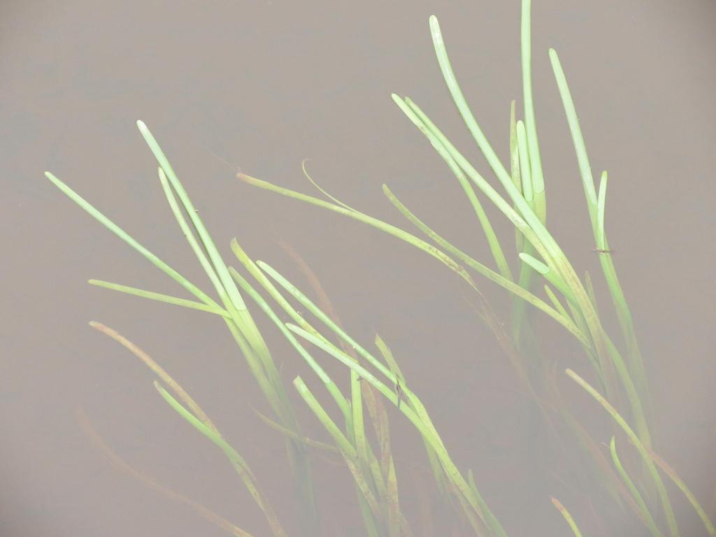 Grass by grammyn