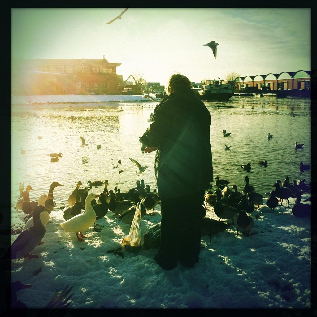 Spot the bird by mastermek