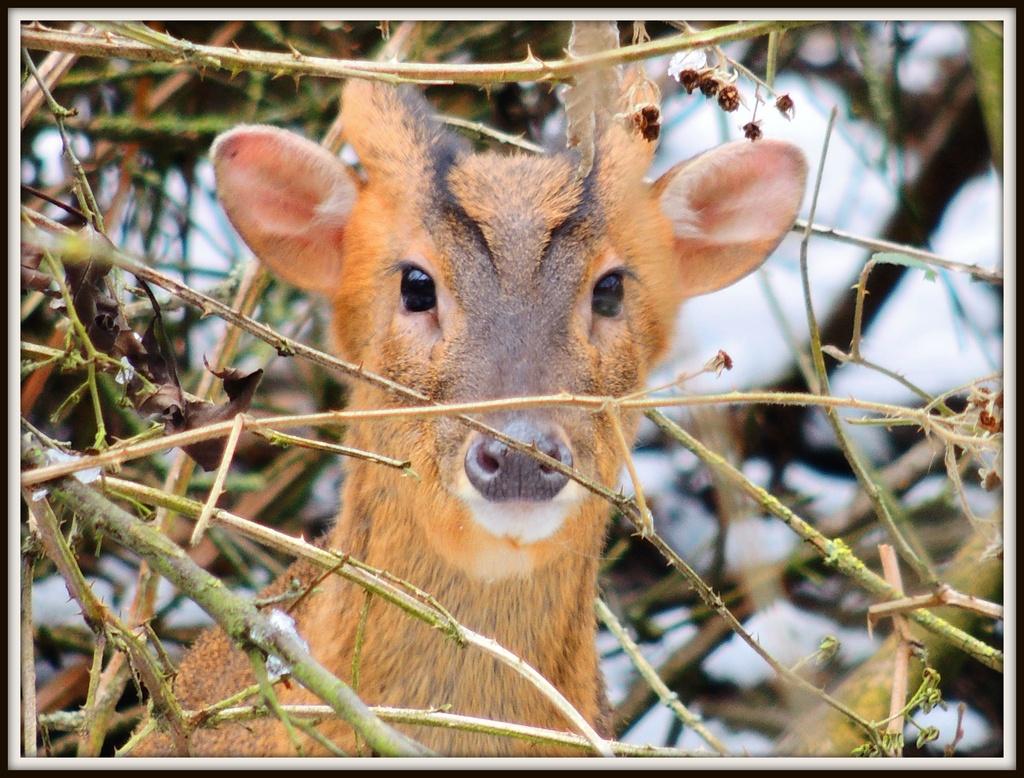 Little Deer by rosiekind