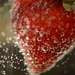 Strawberry with bubbles by kathyladley