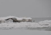 26th Jan 2013 - Cold Ducks