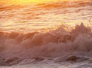 24th Jan 2013 - fanta-sea