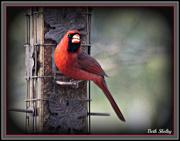 2nd Jan 2013 - Cardinal