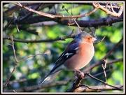 27th Jan 2013 - Garden Birdwatch